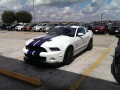 Shelby-10